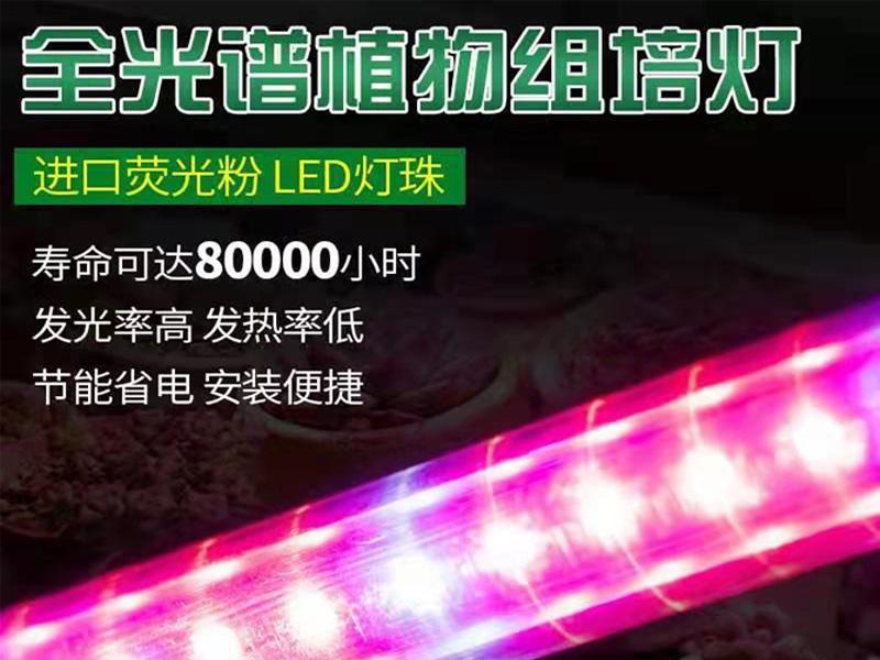 LED组培灯-红蓝光